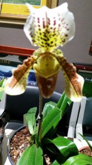 9_Paph Hairefield Hall